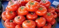 18 ton Azərbaycan pomidoru Rusiyadan geri qaytarıldı