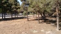 Xətai rayonunda nadir ağaclar məhv edildi