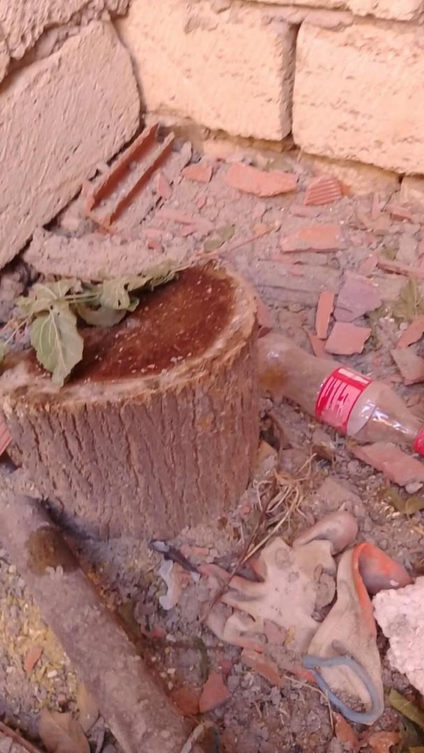 Xətai rayonunda daha bir ağac kəsən məmur haqqında Baş Prokurorluğa müraciət edilib