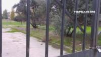 """Bakıxanovda ağacları qırıb yerində bina tikən """"lap böyük"""" adamlar kimdir?.."""