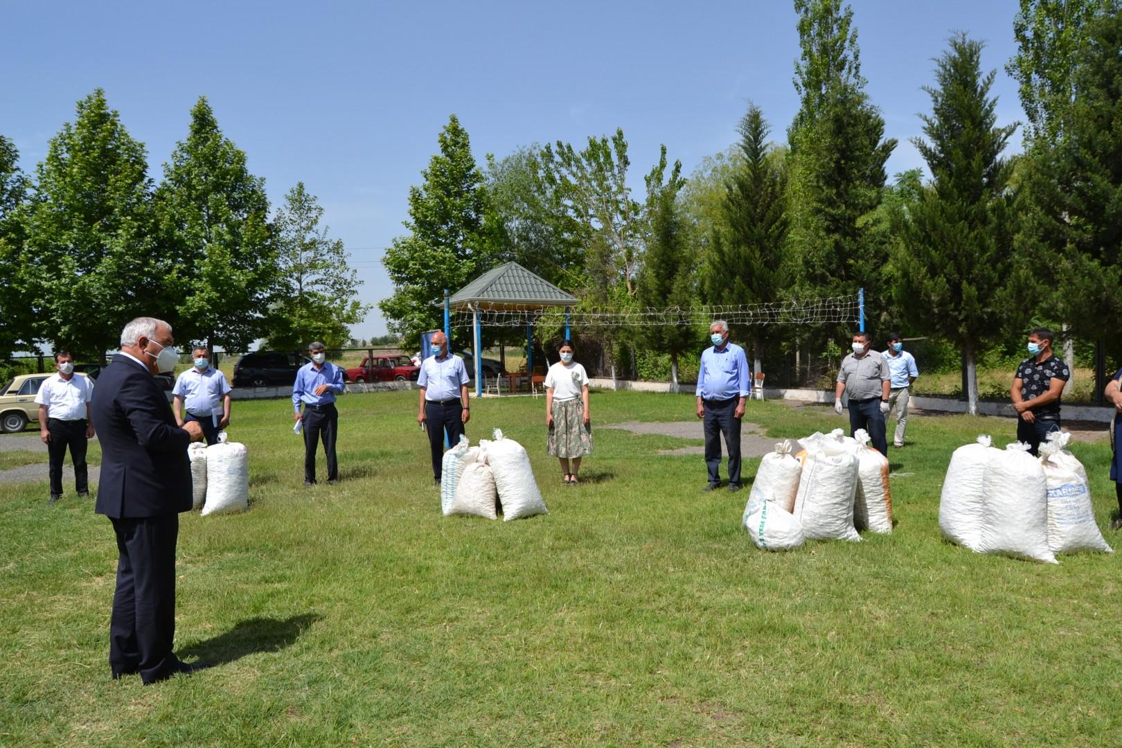 Füzuli rayonunda barama tədarükünə başlanıldı-